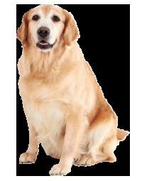 大型犬の場合