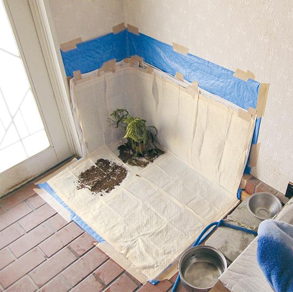 室内トイレトレーニング