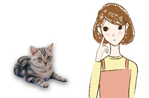 お悩みの飼い主さんと猫ちゃん