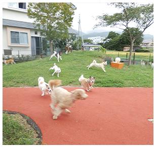 ドッグランで遊ぶ聴導犬たち