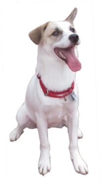 日本聴導犬協会の様子をレポート