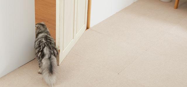 長毛猫は特に熱中症に注意
