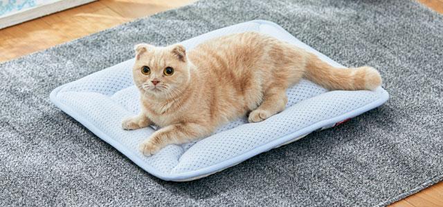 高齢猫も熱中症に注意