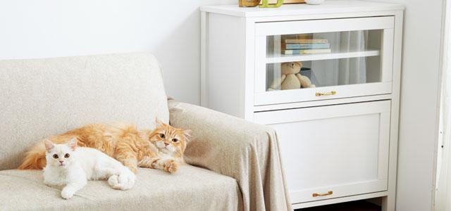 長毛猫や子猫は熱中症に注意