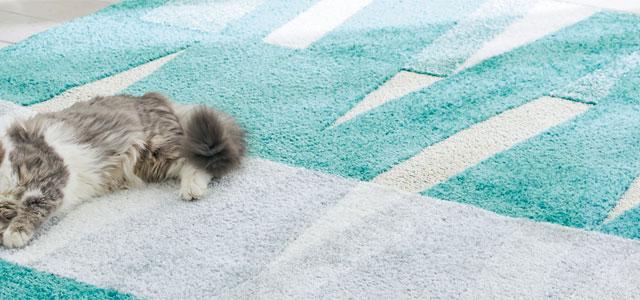 猫が熱中症になってしまった場合の対処法