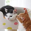 愛猫を守るデンタルケアとは?